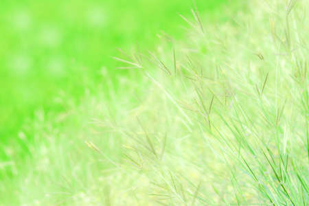 turf flowers: Grass flowers background. Stock Photo