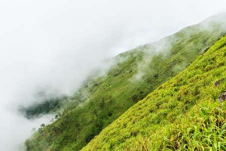green ridge: Foggy clouds cover on top of green mountain ridge.