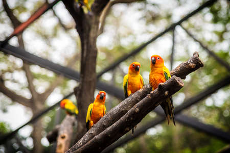 Sun Conure parrot is standing at dry branch. Stock Photo