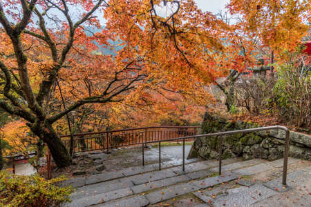 bajando escaleras: Stairs going down from hill in a peaceful forest in autumn. Foto de archivo