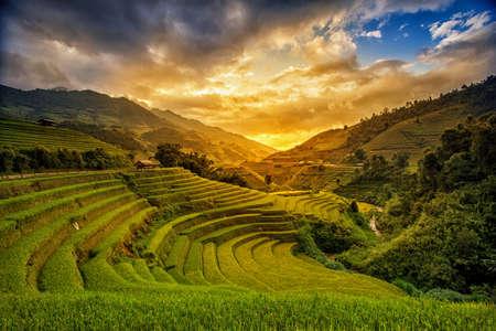 뮤 Cang 차이, 엔 바이, 베트남에서 우기에 테라스에서 쌀 필드. 쌀 필드 노스 웨스트 베트남에서 이식을 준비