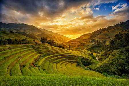 myanmar: Rice fields on terrace in rainy season at Mu Cang Chai, Yen Bai, Vietnam. Rice fields prepare for transplant at Northwest Vietnam