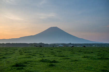 natural landmark: Beautiful view of Mount Fuji and field , This mountain is an famous natural landmark of Japan