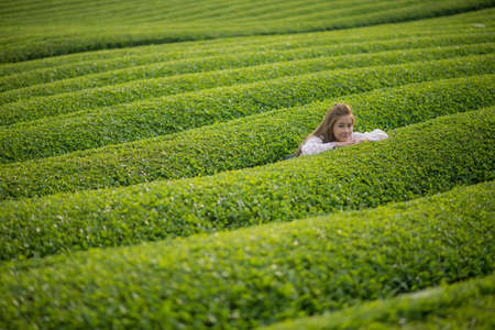 Woman in Green tea plant or Camellia sinensis field. Japan