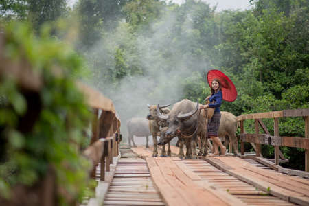 Thai woman wearing typical Thai dress, on bridge and Buffalo background, identity culture of Thailand