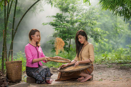 ubud: Beautiful Thai Asian women winnow rice separate between rice and rice chaff identity   in traditionally wearing typical Thai dress culture of Thailand