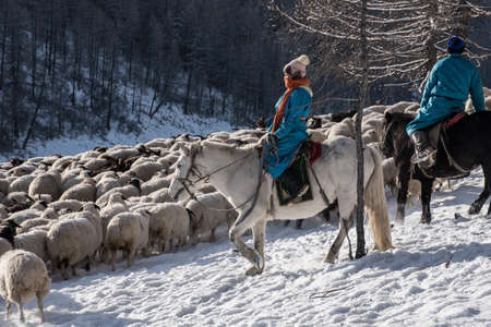 Girl shepherd sitting on horse and shepherding herd of sheep in prairie with snow-capped mountains on background Reklamní fotografie