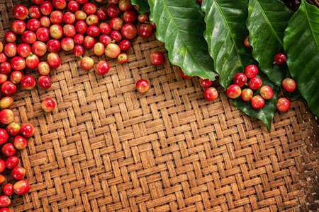 Robusta, Arabica, coffee berries, coffee beans. Top view with copy space for your text