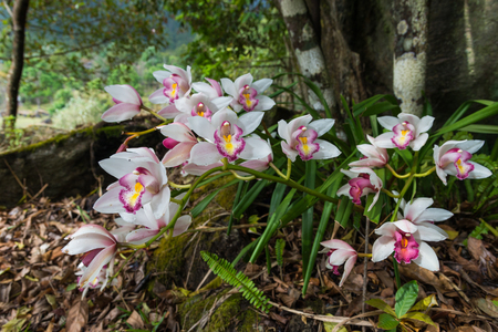 Orchids in Doi Inthanon National Park,Chiangmai,Thailand