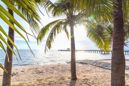 Coconut on the beach.