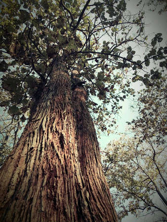 lonesome: Big tree Stock Photo