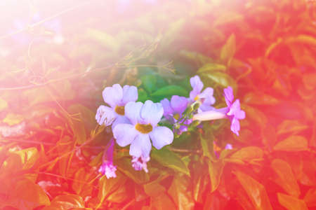 technics: flowers with bokeh effect