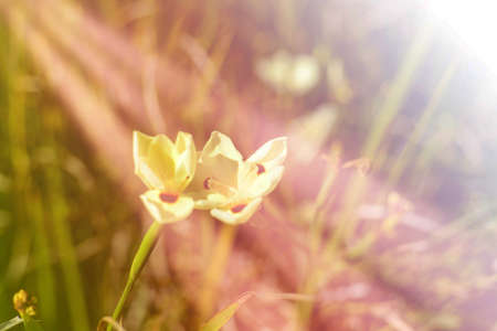 technics: dreamy flowers with color filter