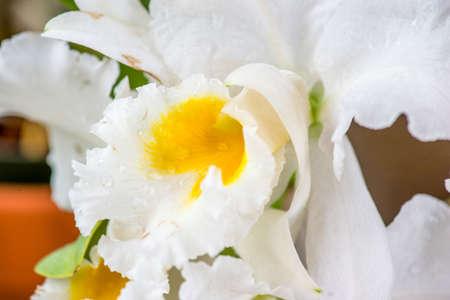 paphiopedilum: Paphiopedilum,, orchid in nature Stock Photo