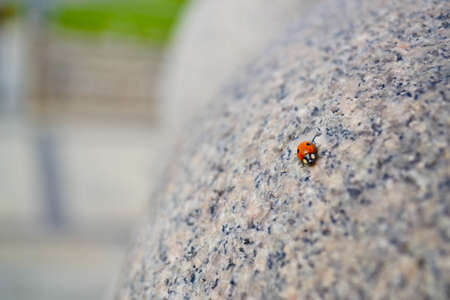 Lady bug walking on granite Stock Photo - 18083132
