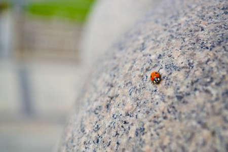 Lady bug walking on granite