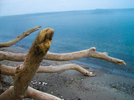 stranded wood