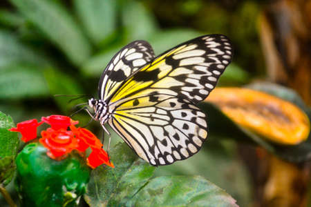 Butterfly on flower Stock Photo - 18218089