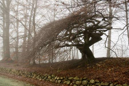 Skew tree in fog Stock Photo