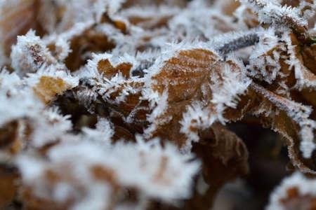Frozen leaves Stock Photo - 19443484