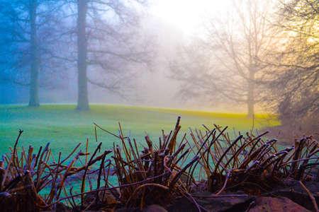 Surreal fog