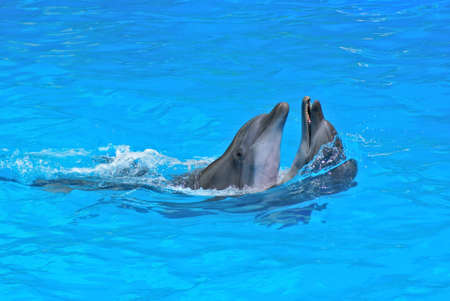 Dolphins in dolphinarium