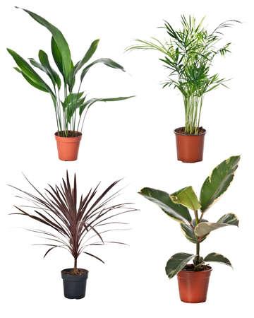 Set of indoor plants in flowerpots on white background