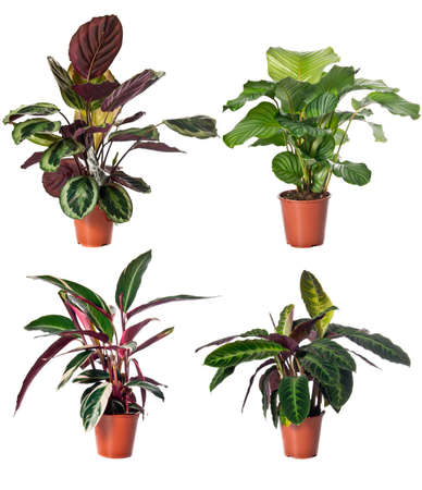Set of indoor plants in flowerpots on white background
