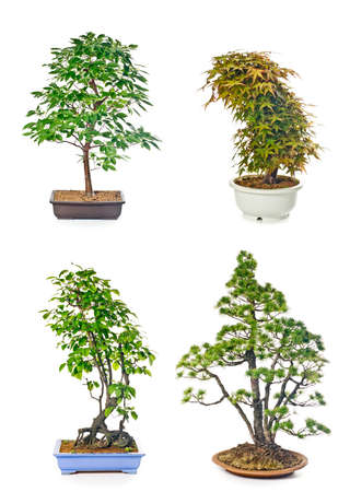 Set of bonsai trees in flowerpots on white background