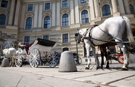 wide angle: Horse with coach wide angle view. Vienna city.