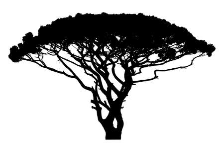 widely: Wide tree silhouette. On white.