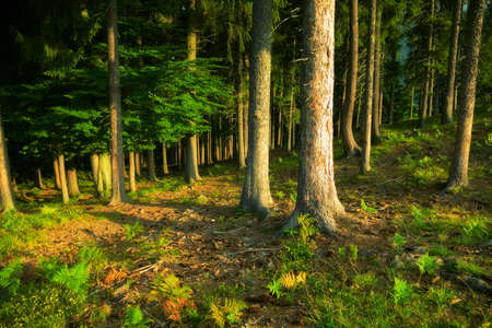 unexplored: Wild forest. Dark saturated colors.