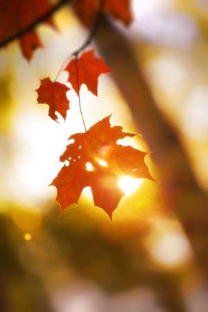Lonely maple leaf. Shallow dof. photo