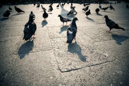 Las palomas en una ciudad. Ángulo de visión amplio.