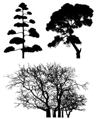 Three tree silhouettes on white. photo