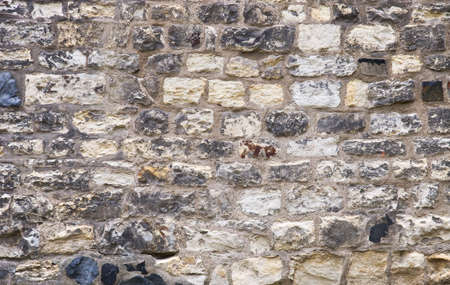 Old wall. Texture or background. photo
