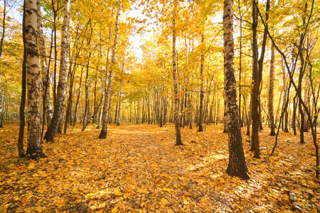 Autumn in a forest. Wide angle landscape.