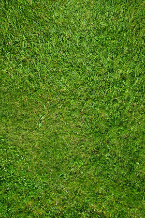 Green grass texture or background.