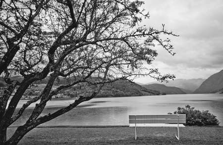 Black and white landscape with tree and bench.