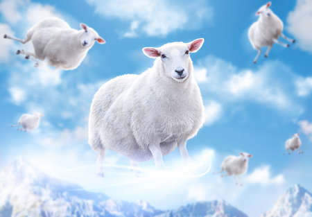 fluffy clouds: Cute sheeps flying in clouds.