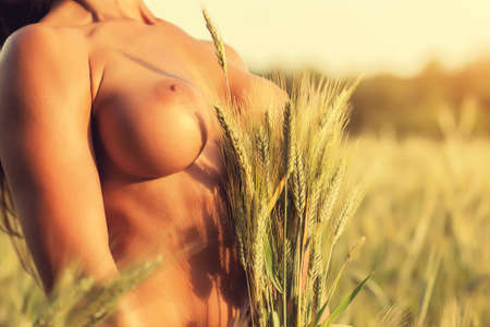 Young woman naked breast with ears of rye close-up. Nature field background. Red summer sunset light. photo