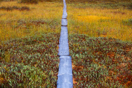 mosses: Mosses and lichens and wooden path on swamp in Finland