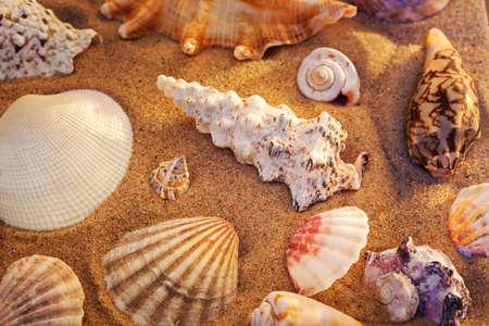 shell: Seashells still life. Red sunset colors.