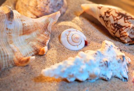 colores calidos: Seashells naturaleza muerta. Colores cálidos del atardecer.