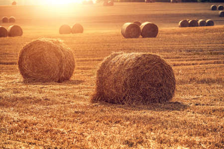 vibrant colors: Haystack on a field. Red sunset vibrant colors. Stock Photo