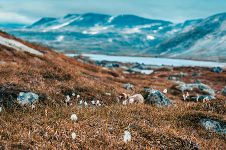 foreground focus: Norway severe landscape and small flowers. Focus on flowers on foreground. Autumn film style colors.