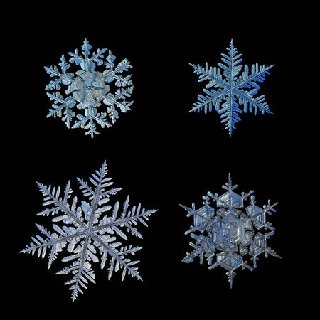 Set with four snowflakes, isolated on black background. This is macro photo of real snow crystals: big stellar dendrites and fernlike dendrites with complex structure. Stock Photo