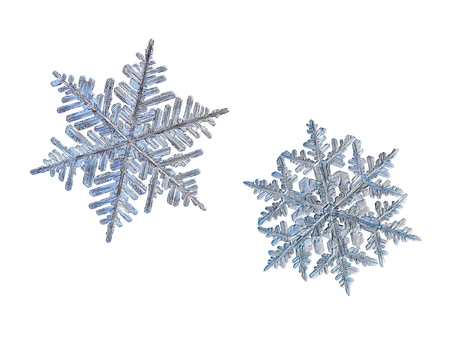 Two snowflakes isolated on white background. Macro photo of real snow crystals: large stellar dendrites with complex, elegant shapes, fine hexagonal symmetry, glossy relief surface and long, ornate arms with side branches.