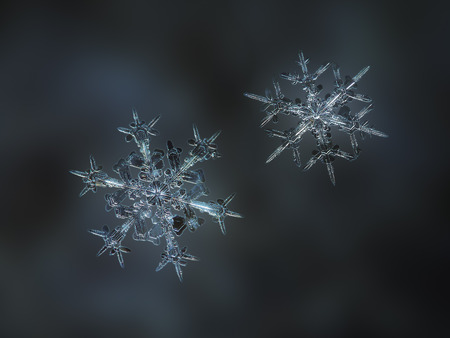 Two snowflakes glowing on smooth blur background. Macro photo of real snow crystals: large stellar dendrites with complex elegant shapes, perfect hexagonal symmetry, glossy relief surface, long ornate arms and beautiful inner patterns.