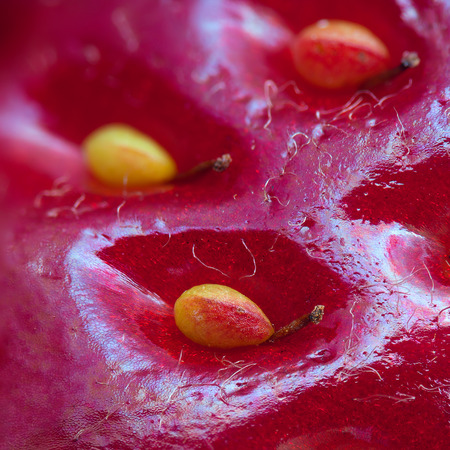 Surface of strawberry with seeds and their sprouts, photographed at high magnification. You can see all details of the seed and cell structure of surface.